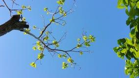 Árvore Foto de Stock