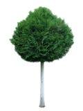 Árvore 3 Foto de Stock