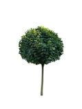 Árvore 5 Fotos de Stock Royalty Free
