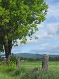 A árvore Fotografia de Stock
