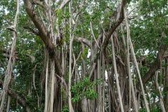 A árvore Fotografia de Stock Royalty Free