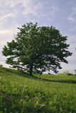 Árvore Imagem de Stock