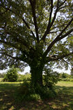 Árvore Fotos de Stock
