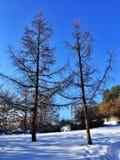 Árvore Fotografia de Stock