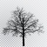 Árvore 6587 Imagens de Stock