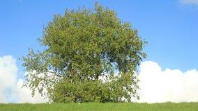 Árvore video estoque