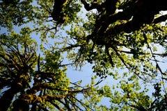 Árvore 2 aéreos Fotografia de Stock Royalty Free