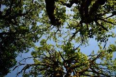 Árvore 3 aéreos Imagens de Stock Royalty Free