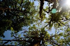 Árvore 4 aéreos Imagens de Stock