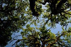 Árvore 8 aéreos Imagens de Stock