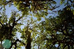 Árvore 9 aéreos Fotos de Stock