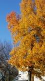 Árvore abaixo da rua Imagem de Stock Royalty Free