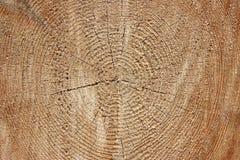 Árvore abatida no foresty Imagens de Stock Royalty Free