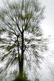 Árvore abstrata Foto de Stock Royalty Free