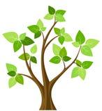 Árvore abstrata da mola. Imagens de Stock Royalty Free