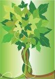 Árvore abstrata do verão Imagens de Stock