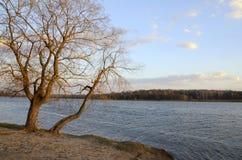 A árvore acima do lago na mola adiantada imagem de stock