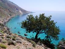 Árvore acima do mar Imagens de Stock Royalty Free