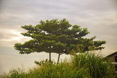 Árvore africana verde durante a névoa da manhã imagem de stock
