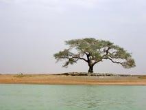 Árvore agradável Foto de Stock