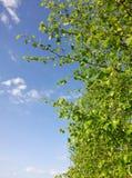 Árvore agradável Imagem de Stock Royalty Free