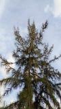 Árvore agradável imagens de stock royalty free