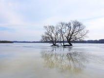 Árvore agradável no campo de inundação, Lituânia imagens de stock