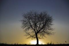 Árvore ajustada de Sun Fotografia de Stock