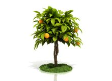 Árvore alaranjada Imagens de Stock Royalty Free
