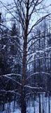 Árvore alaranjada 2 fotos de stock