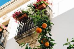 Árvore alaranjada contra o balcão decorado com os potenciômetros de flor coloridos Fotos de Stock Royalty Free