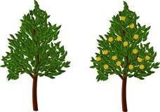 Árvore alaranjada do vetor Imagens de Stock Royalty Free