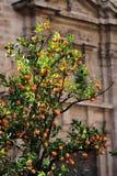 Árvore alaranjada na cidade com uma igreja atrás Fotografia de Stock