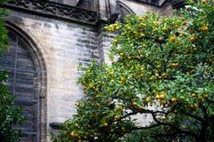 Árvore alaranjada na frente da catedral de Sevilha Fotografia de Stock