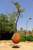 Árvore alaranjada pairando. Jaffa. Israel. Imagens de Stock