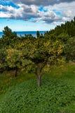 Árvore alaranjada perto do mediterrâneo imagens de stock