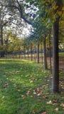 Árvore alinhada Fotos de Stock