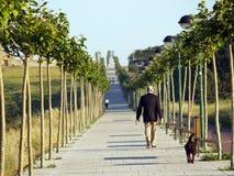 Árvore alinhada de Algorta walway fotos de stock