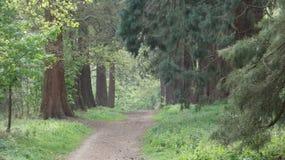 A árvore alinhou a avenida no parque 1 do país de Havering imagens de stock