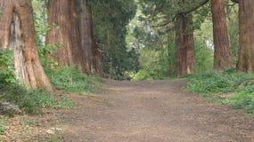 A árvore alinhou a avenida no parque 4 do país de Havering foto de stock