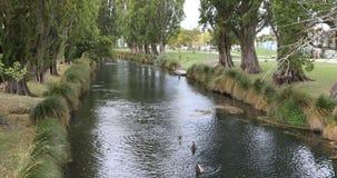A árvore alinhou o rio em Christchurch do centro, Nova Zelândia 4K video estoque