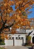 A árvore alinhou a rua residencial com cor da queda fotografia de stock royalty free