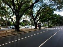 A árvore alinhou ruas fotografia de stock royalty free