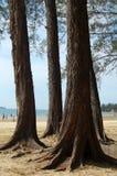 Árvore alta fotografia de stock