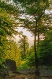 Árvore alta no afastamento foto de stock