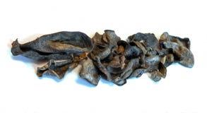 Árvore amarrotada secada do dinheiro das folhas e gerânio murchados das flores, imagem de stock royalty free