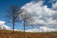 Árvore antes da tempestade na montanha de Plana Foto de Stock Royalty Free