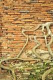Árvore antiga da raiz Fotografia de Stock Royalty Free