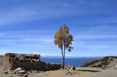 Árvore ao lado da cabana de pedra pequena velha com o telhado cobrido com sapê em Isla del Sol no lago Titicaca, Bolívia fotografia de stock