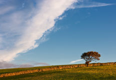 Árvore ao lado de uma parede de pedra Fotos de Stock Royalty Free